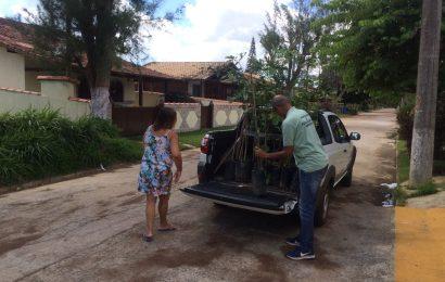 Moradores de Tamois recebem mudas de ipê em ação de conscientização da Coordenadoria do Meio Ambiente