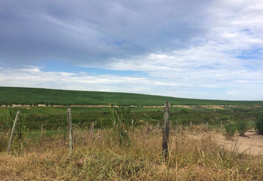 Cultura Predatória da Cana-de-açúcar – Será que vamos acabar com nossa agricultura tradicional?????